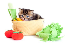 Kitten striped brittish with vegetables isolated Stock Images