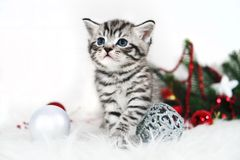 Kitten striped cute sitting under Christmas tree. In decorations Royalty Free Stock Photography