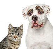 Kitten and strong dog Royalty Free Stock Photo