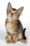 Kitten in studio. On a light background Royalty Free Stock Photos