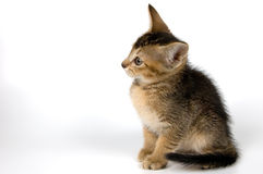 Kitten in studio. On a light background Royalty Free Stock Image