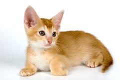 Kitten in studio. On a light background Stock Photography