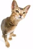 Kitten in studio. On a neutral background Stock Photos