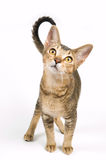 Kitten in studio. On a neutral background Stock Image