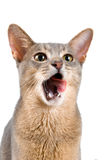 Kitten in studio. On a neutral background Stock Photo