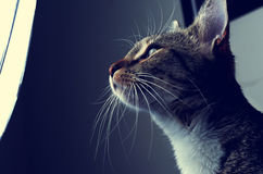 Kitten and studio light royalty free stock images