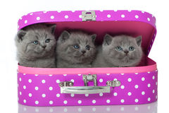 Kitten in suitcase Stock Photo