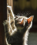 Kitten in the sunshine. Funny kitten in the sunshine Stock Image