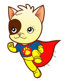 Kitten super hero Stock Images
