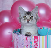 Kitten Surprise! Stock Photos
