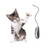 Kitten Swatting a Computer Mouse Royalty Free Stock Images