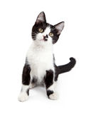 Kitten With Sweet Expression linda Imagenes de archivo
