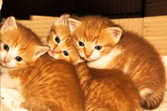 Kitten,sweetness,tenderness. Bunch of kittens born recently Royalty Free Stock Photography