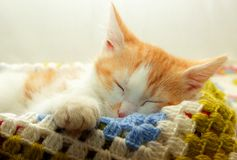 Kitten swung his foot and sleeps Stock Images