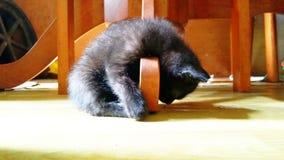 Kitten Take un pelo sotto il tavolo da pranzo fotografie stock libere da diritti