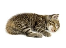 Kitten Taking A Nap On A White Background Royalty Free Stock Images