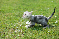 Kitten taking a bath in the garden Royalty Free Stock Photo