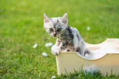 Kitten taking a bath in the garden Stock Image