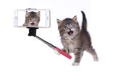 Kitten Taking His Own Photo com vara de Selfie foto de stock royalty free