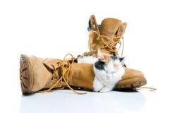 Kitten taking a nap Stock Photo