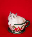 Kitten in a teacup Stock Photography