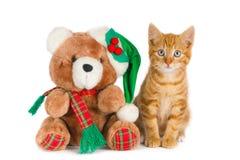 Kitten and teddy bear, Christmas setting Stock Photo