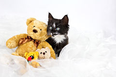 Kitten with teddy bears Stock Image