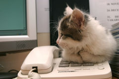 Kitten on a telephone Royalty Free Stock Photography