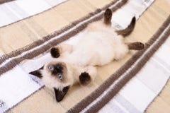 Kitten on textile background Stock Photo