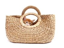 Kitten in textile bag Stock Photography