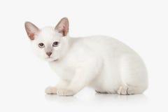 Kitten. Thai cat on white background Royalty Free Stock Photography
