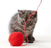 Kitten and thread ball Royalty Free Stock Images