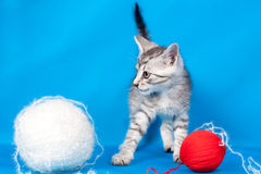 Kitten and threads for knitting Stock Photo