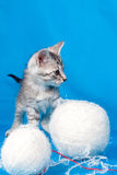 Kitten and threads for knitting Royalty Free Stock Images