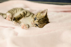 Kitten with tiger stripes on blanket stock photo