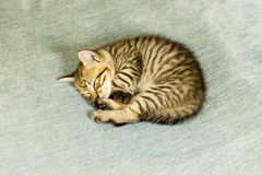 Kitten with tiger stripes on blue couch Stock Photo