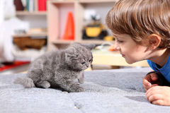Kitten with toddler Royalty Free Stock Photo