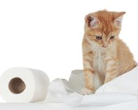Kitten and toilet paper. Cute kitten playing with roll of toilet paper Royalty Free Stock Photos