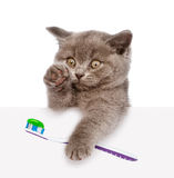 Kitten with a toothbrush looking out because of the poster. isolated Stock Photography