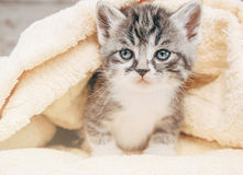 Kitten on towel Royalty Free Stock Image