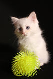 Kitten and toy royalty free stock images
