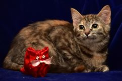 Kitten and toy cat Stock Photo