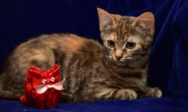 Kitten and toy cat Royalty Free Stock Photography