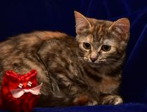 Kitten and toy cat Royalty Free Stock Image