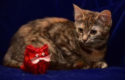 Kitten and toy cat Stock Photos