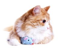 A kitten with  toy mouse Stock Photography