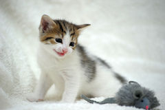 Kitten and toy mouse Stock Photos