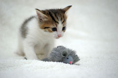 Kitten and toy mouse Royalty Free Stock Photography