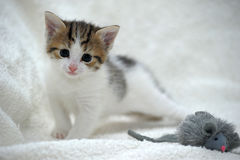 Kitten and toy mouse Royalty Free Stock Photos