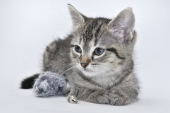 Kitten and toy mouse Stock Image